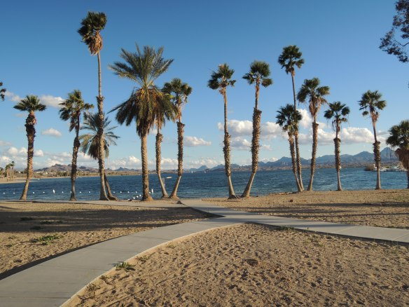 Daytime photo in Rotary Community Park, Lake Havasu City, Arizona (1-27-13)